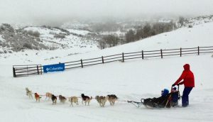 All Seasons Adventures dog sledding