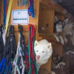 Dog sled tours, Park City Utah
