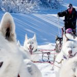 Dog sledding Park City, Utah