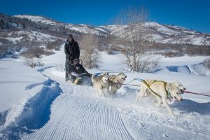 Park City dog sledding